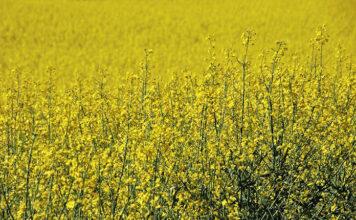 Skuteczne środki do zabezpieczenia upraw